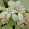 White Sweetheart Rose and White Orchid Corsage - Green