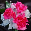 Hot Pink Mini Carnation Corsage - Ht Pink