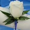 White Single Rose Boutonniere - Blue