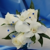 White Sweetheart Rose and White Orchid Corsage - Blue