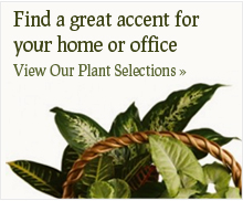 Plant Selections