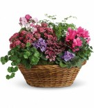 Simply Chic Plant Basket
